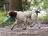Chatsworth gun dog trials 2014